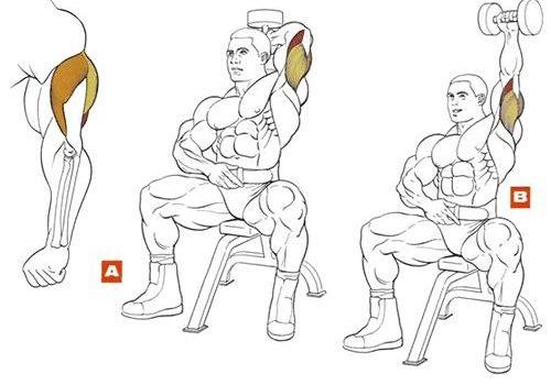 Упражнение на трицепс и бицепс в домашних условиях 425