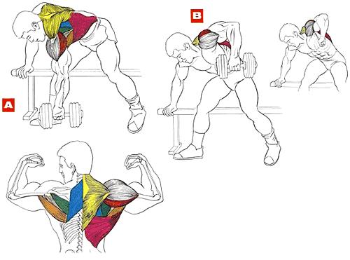 Какие упражнения с гантелями для спины