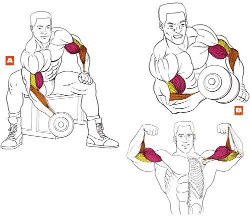 Какие упражнения можно делать с гантелями