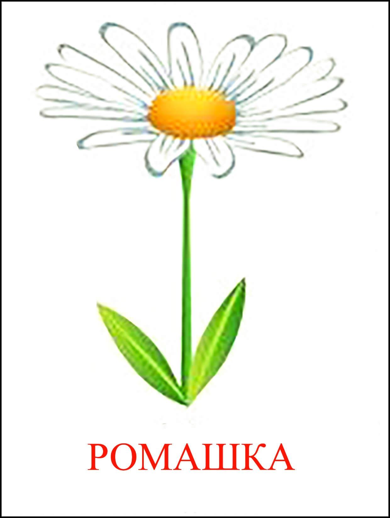 Картинка цветок ромашки для детей