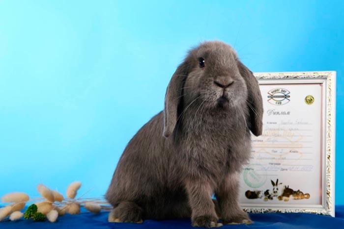 каждую кролик баранчик фото узелками уже протяжении